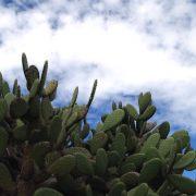 Maigrir avec le nopal : une plante bénéfique pour la perte de poids