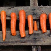 Le régime paléo ne correspondrait pas à ce que nos ancêtres mangeaient